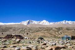 Il campo dei nomadi di Changpa, valle di Changthang, Ladakh, India Fotografie Stock Libere da Diritti