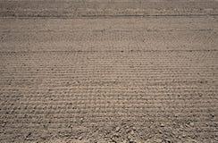 Il campo del raccolto ha preparato per piantare Immagine Stock