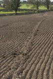 Il campo del raccolto ha preparato per piantare Fotografia Stock