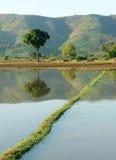 Il campo dell'agricoltura, l'albero, montagna, riflette Immagini Stock Libere da Diritti