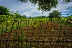 Il campo dell'azienda agricola già ha fertilizzato e aspetta per coltivare circondare dal recinto di legno e dal bello cielo come Fotografie Stock Libere da Diritti