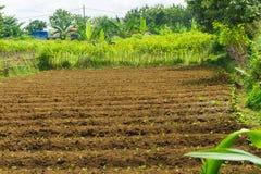 Il campo dell'azienda agricola già ha fertilizzato e aspetta per coltivare con i cespugli intorno al dramaga contenuto foto bogor Fotografie Stock Libere da Diritti