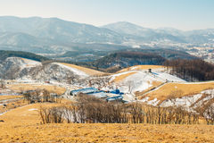 Il campo di erba asciutta e la montagna e la neve e l'inverno abbelliscono nell'allevamento di pecore di Daegwallyeong, Corea Fotografie Stock