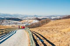Il campo di erba asciutta e la montagna e la neve e l'inverno abbelliscono nell'allevamento di pecore di Daegwallyeong, Corea Immagine Stock