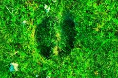 Il campo di erba verde ed il sole nella mattina modellano il polmone Fotografie Stock