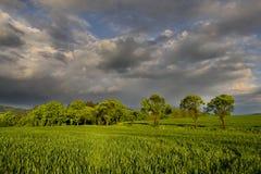Il campo di grano Fotografia Stock