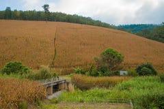 Il campo di grano e la diga Immagine Stock Libera da Diritti