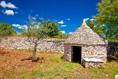 Il campo di olivo e Istrian Kazun lapidano la vista della capanna Fotografie Stock