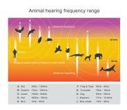 Il campo di udibilità descrive la gamma di frequenze illustrazione di stock