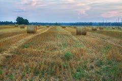 Il campo dorato spettacolare con fieno rotondo rotola nell'ambito di una s drammatica Fotografia Stock