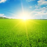 Il campo ed il sole verdi aumentano nel cielo blu Immagini Stock