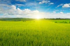 Il campo ed il sole verdi aumentano nel cielo blu Immagini Stock Libere da Diritti
