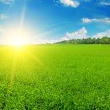 Il campo ed il sole verdi aumentano nel cielo blu Fotografia Stock