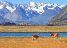 Il campo giallo, il lago blu e le montagne Fotografia Stock