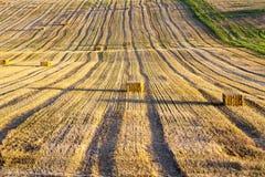 Il campo ha effettuato il raccolto del grano Fotografia Stock