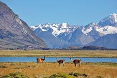 Il campo, il lago e le montagne innevate Fotografia Stock