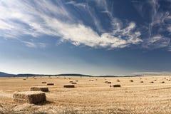 Il campo raccolto Fotografie Stock Libere da Diritti