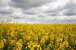 Il campo variopinto in fiore immagini stock