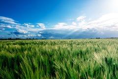 Il campo verde immagine stock