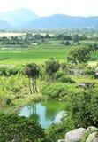 Il campo verde di riso, gli alberi e le colline abbelliscono Fotografie Stock