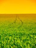 Il campo verde fertile con il trattore rintracciato segue il giorno di estate non soleggiato con cielo blu Fotografia Stock
