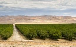 Il campo verde fertile la California dell'agricoltura della terra dell'azienda agricola del frutteto si è unito Immagine Stock Libera da Diritti