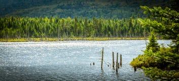 Il Canada - parco nazionale di Mont-Tremblant Fotografie Stock Libere da Diritti