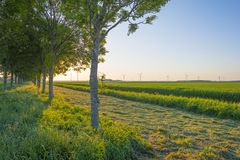 Il canale attraversa un paesaggio rurale alla luce dell'alba Immagine Stock Libera da Diritti