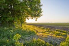 Il canale attraversa un paesaggio rurale alla luce dell'alba Immagine Stock