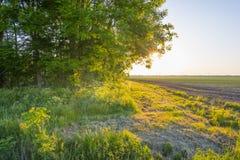 Il canale attraversa un paesaggio rurale alla luce dell'alba Fotografie Stock