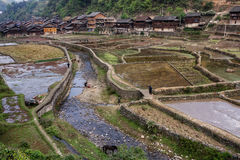 Il canale che passa attraverso le risaie si avvicina al villaggio, Zhaoxing, Guizho Immagini Stock