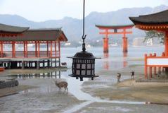 Il cancello ed il rame rossi di torii esaminano in controluce la lanterna Fotografia Stock