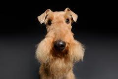 Il cane è il vostro migliore amico Fotografia Stock Libera da Diritti