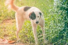 Il cane è urinante o orinante sull'erba verde al parco pubblico fotografia stock