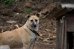 Il cane Fotografia Stock Libera da Diritti