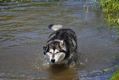 Il cane agita fuori l'acqua Fotografia Stock Libera da Diritti