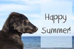 Il cane all'oceano, manda un sms all'estate felice Fotografia Stock Libera da Diritti
