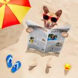Il cane alla spiaggia legge il giornale Immagine Stock