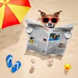 Il cane alla spiaggia legge il giornale Fotografia Stock Libera da Diritti
