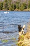 Il cane aspetta emozionante il suo essere umano sul puntello fotografia stock libera da diritti
