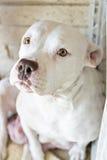 Il cane bianco ha dato alla luce appena Fotografie Stock Libere da Diritti