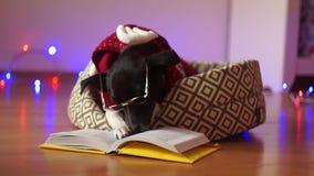 il cane bianco Nero occhialuto ed in un vestito della renna ha messo le zampe sul libro aperto Nuovo anno felice stock footage