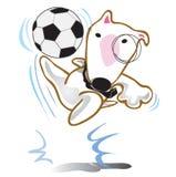 Il cane bull terrier gioca a calcio Fotografia Stock Libera da Diritti
