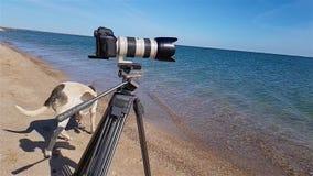 Il cane cammina vicino alla macchina fotografica su un treppiede sul movimento lento del lungonmare archivi video