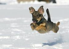 Il cane che salta sulla neve immagine stock libera da diritti
