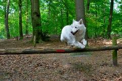 Il cane che salta una rete fissa Fotografie Stock Libere da Diritti