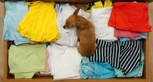 Il cane che si è nascosto nel petto Immagini Stock