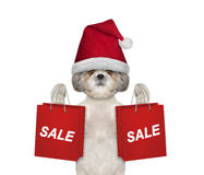 Il cane con il vestito da festa di Natale sostiene con il sacchetto della spesa Fotografie Stock
