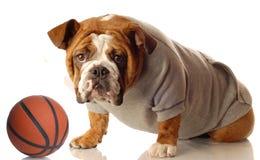 Il cane con suda e pallacanestro Fotografia Stock