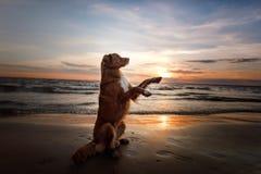 Il cane dà la sua zampa Un animale domestico sul mare, su una vacanza e su uno stile di vita sano Fotografia Stock